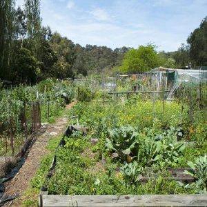 allotment-image